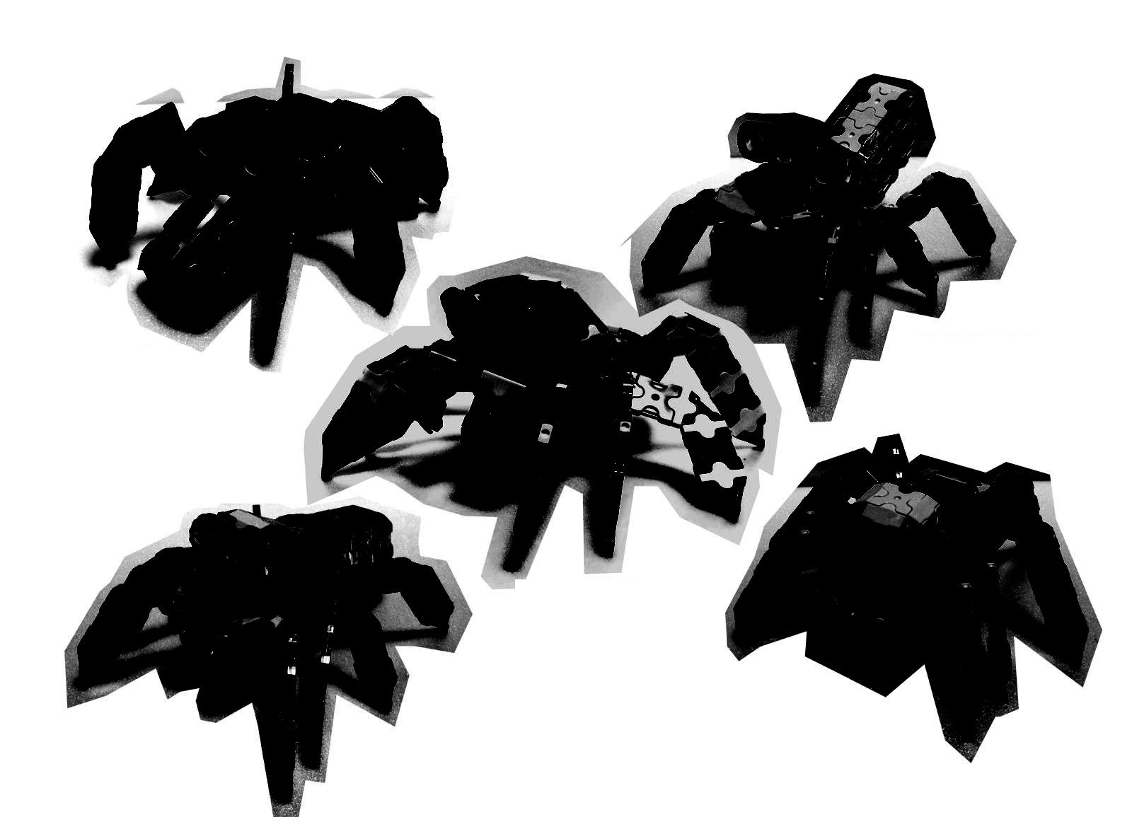 Spider5_IMG_0550s.jpg