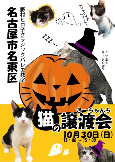 猫の譲渡会の告知