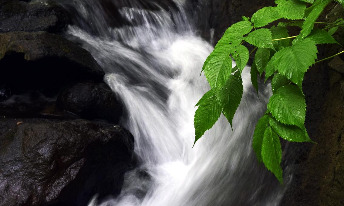 渓流の青葉