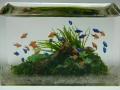 Tropical Fish Aquarium Miyuki Kobayashi