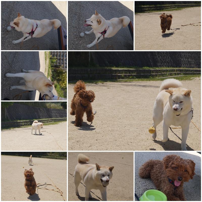 見晴公園で遊んできました(^_-)-☆5