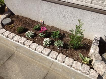 花壇1シマトネリコ