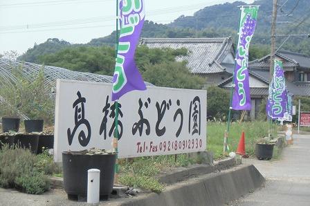 髙橋ぶどう園 (4)