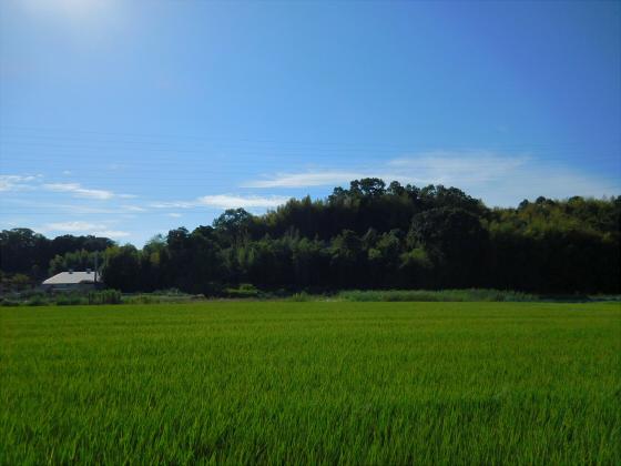 和歌山電鐵沿線の竈山神社08