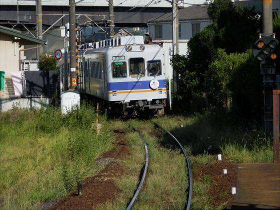 和歌山電鐵のニタマ駅長31