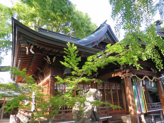 白山神社2016年5月-04