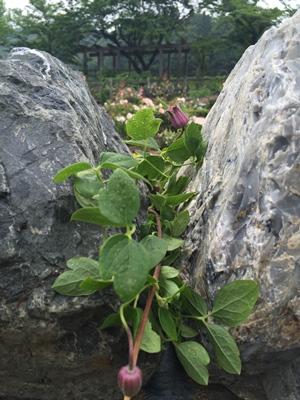 ローザンベリー石垣3