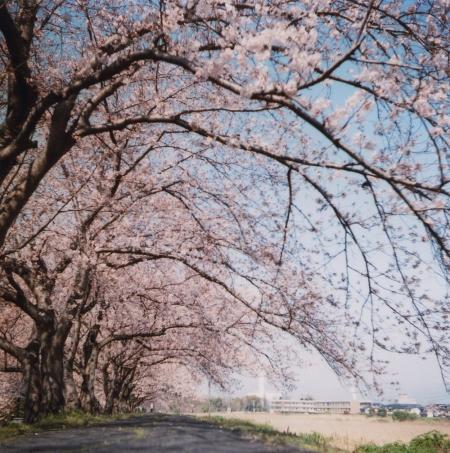 TOY-1352_Yashica.jpg