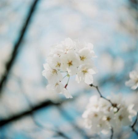TOY-1353_Yashica.jpg