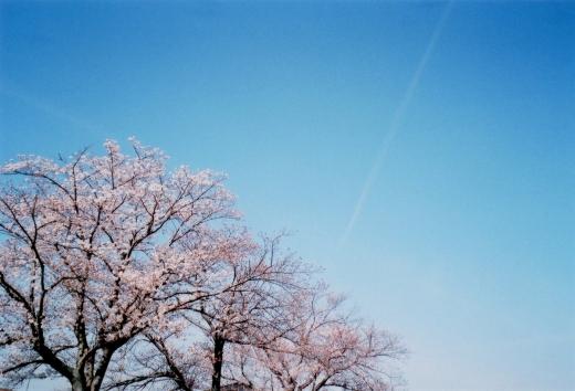 TOY-1361_Natura.jpg