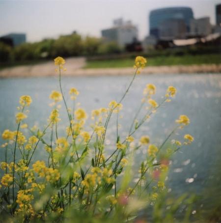 TOY-1371_Yashica.jpg