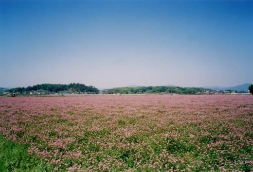 TOY-1430_Natura.jpg