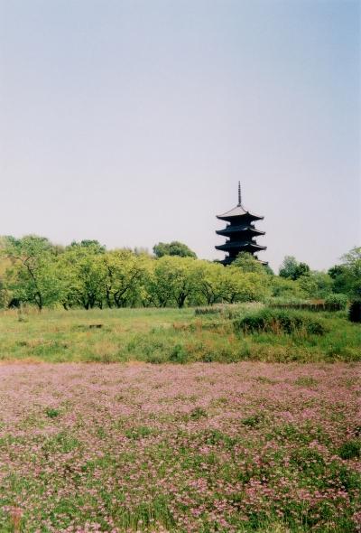 TOY-1433_Natura.jpg