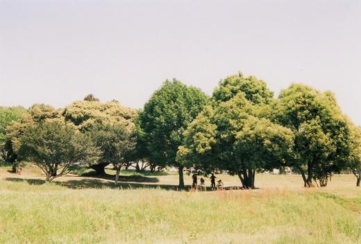 TOY-1434_Natura.jpg