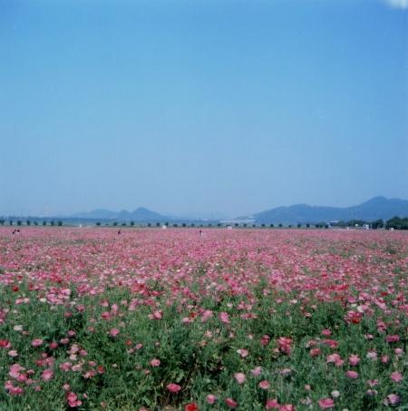 TOY-1483_Yashica.jpg