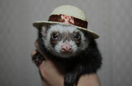 麦わら帽子とミッキー