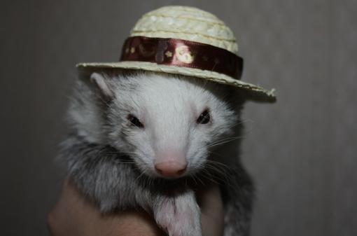 麦わら帽子とマルコ
