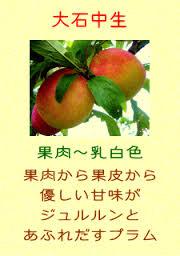 images_20160730123547ede.jpg