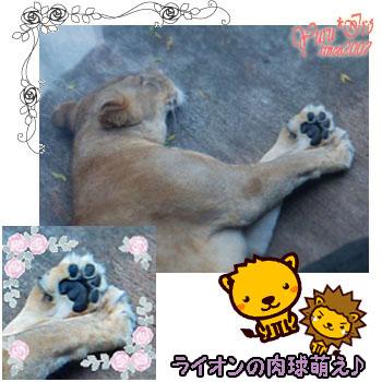 2016yuruiro_0830_k_004