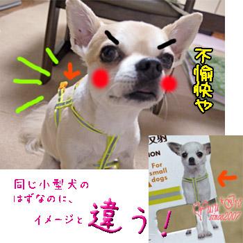 2016yuruiro_0731_k_003