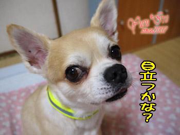 2016yuruiro_0731_k_005