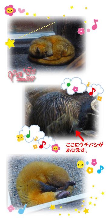 2016yuruiro_0830_k_005