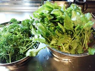 0523青汁用野菜