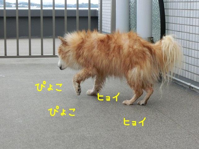 b-CIMG4623.jpg