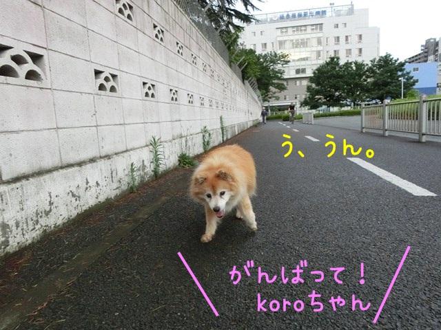 b-CIMG4649.jpg