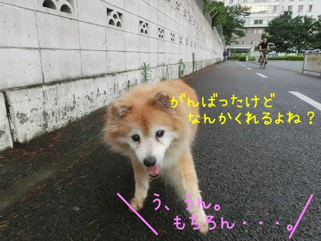 b-CIMG4651.jpg