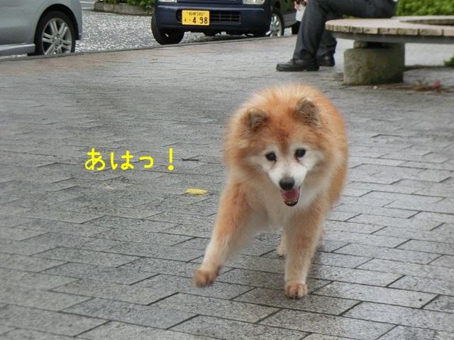 b-CIMG4654.jpg