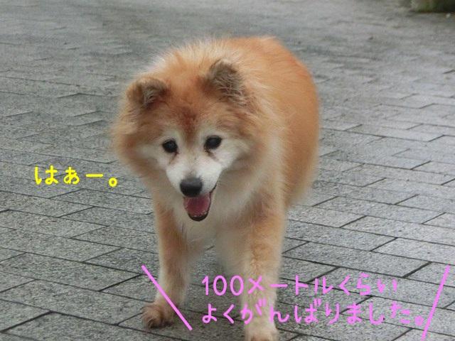 b-CIMG4655.jpg