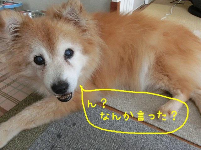b-CIMG4667.jpg