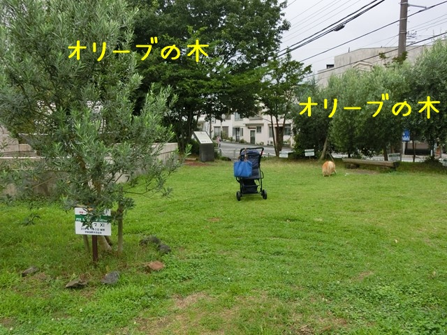 b-CIMG4696.jpg