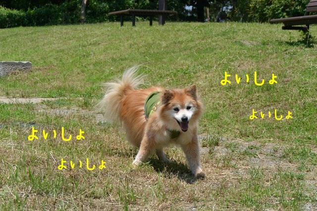 b-DSC_5029.jpg