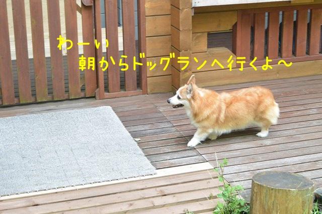 b-DSC_5164.jpg