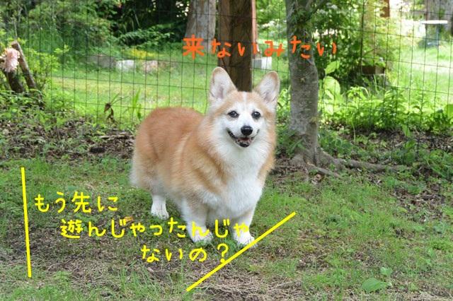 b-DSC_5181.jpg