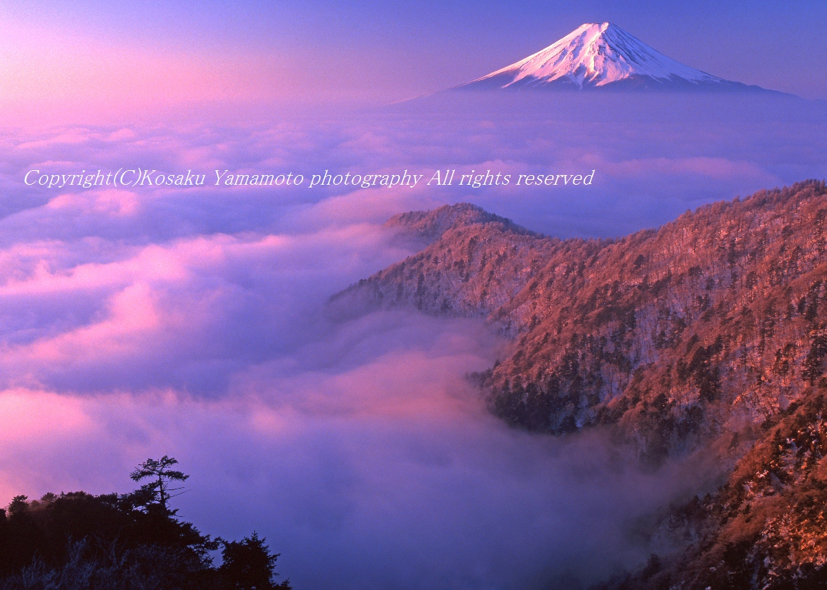 雲上孤高 (三ツ峠)