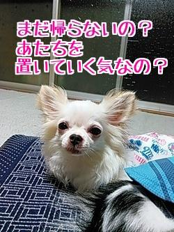 2016-09-16-03.jpg