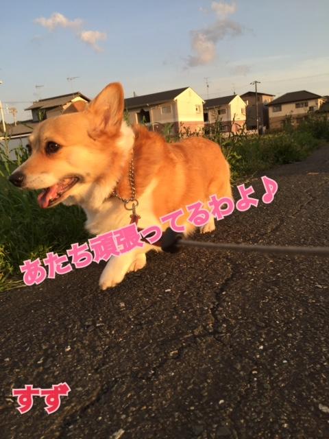 IMG_3339.jpg