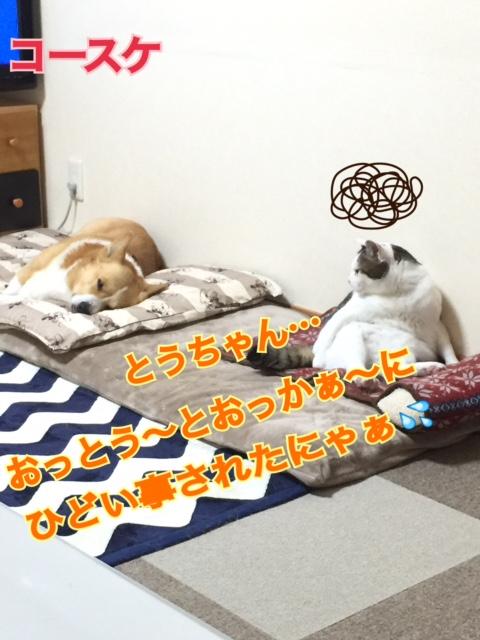 IMG_3361.jpg