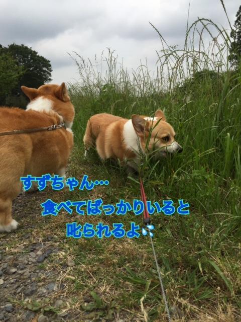 IMG_4058.jpg