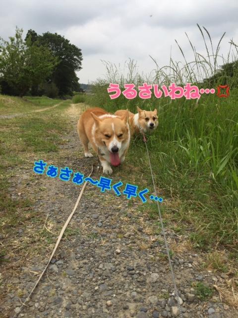 IMG_4059.jpg