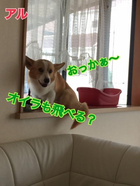 IMG_4688_20160702090034b35.jpg