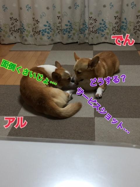 IMG_6462.jpg