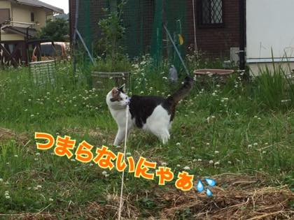 th_IMG_4054.jpg