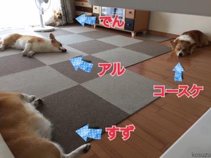 th_IMG_5217.jpg