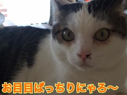 th_IMG_5491.jpg