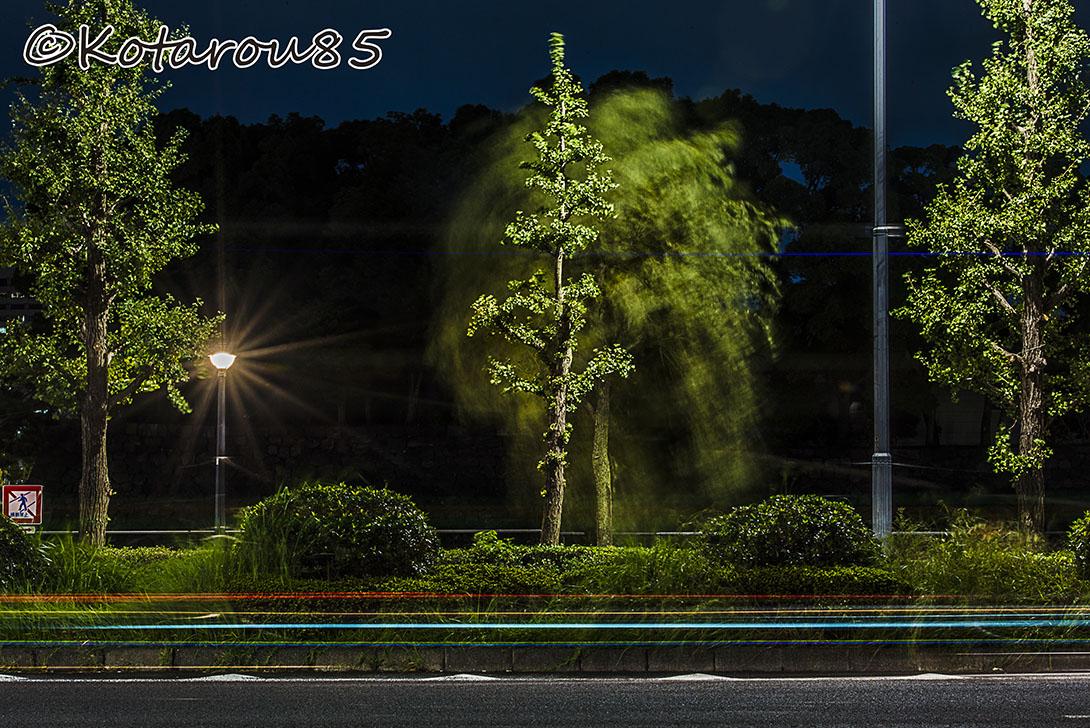 皇居の濠に光の波 20161009