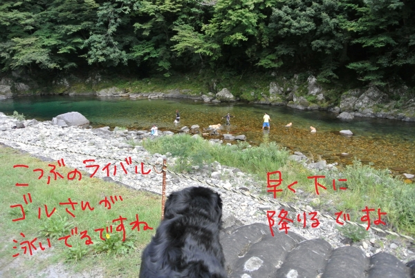 DSC_4532.jpg